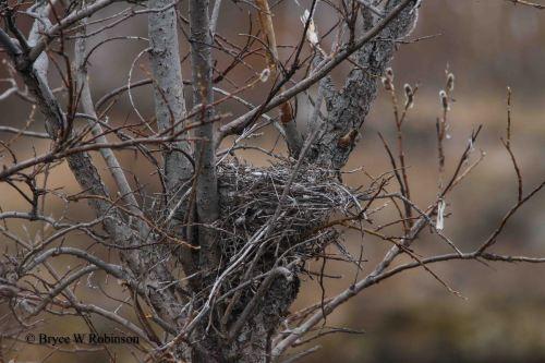 NSHR Nest