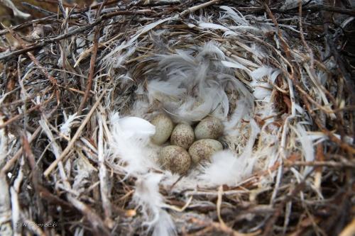 NSHR Nest wm-0900s