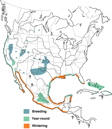 Figure 1. Range of Snowy Plover - Charadrius nivosus in North and Central America. Image taken from Birds of North America Online (see referenced information)