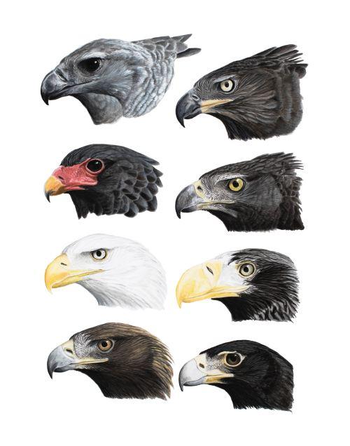 Eagles-online-01