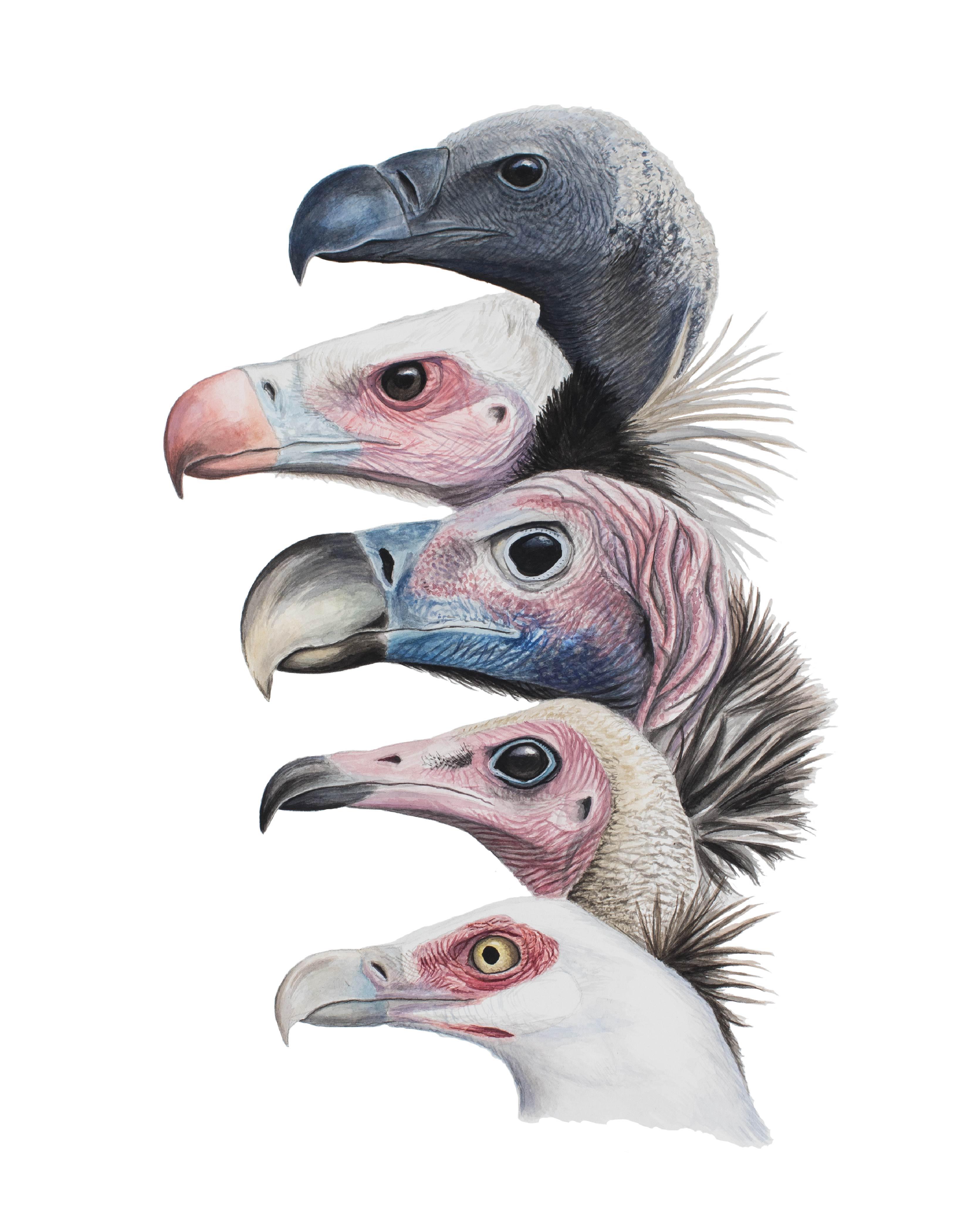 Vultures-online-01